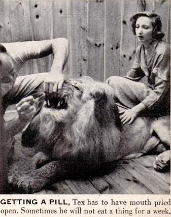 Tex is given pills. Bobbyetta in background.