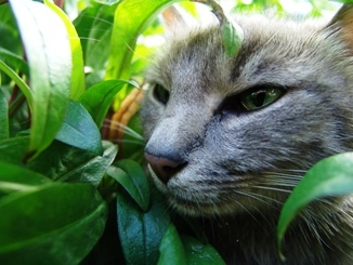 cat, eyes, vegetation